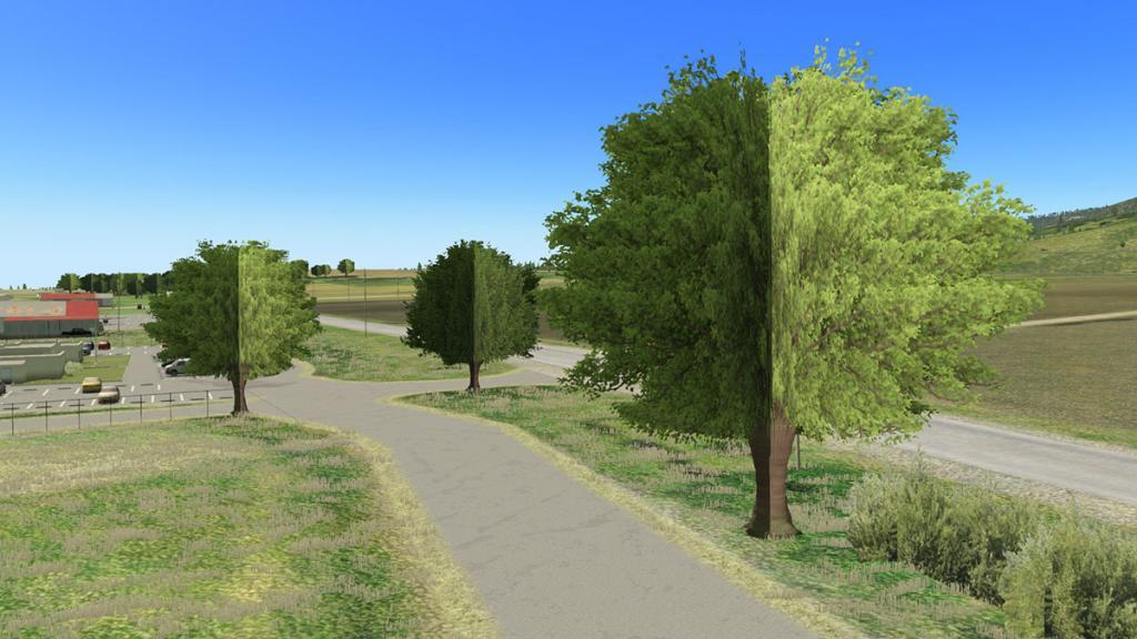 KHAF HMB Trees and Power 3.jpg