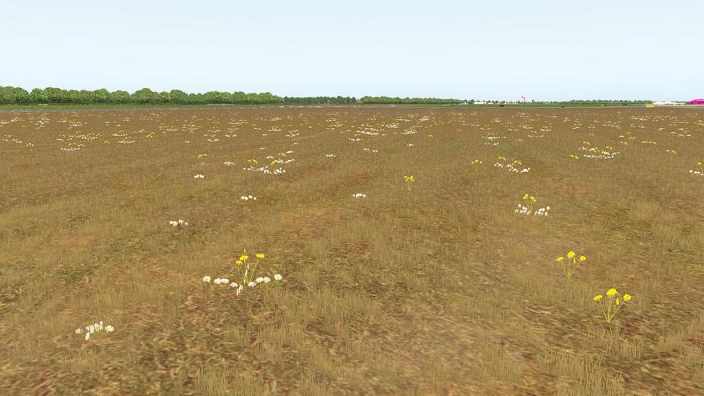 EDLW - Field 4.jpg